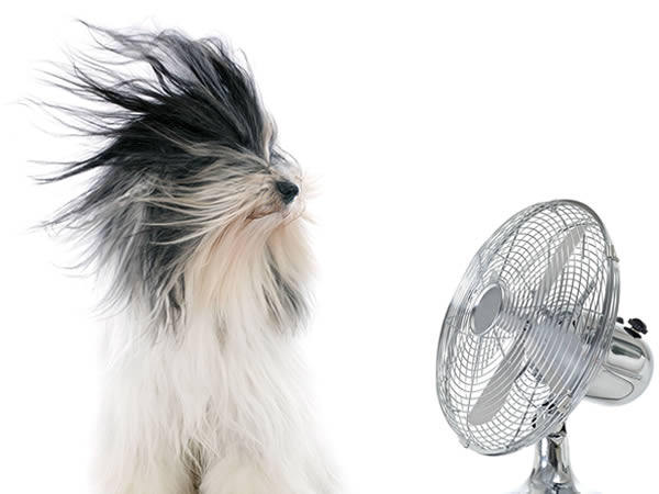 Lüftung Hund vor Ventilator